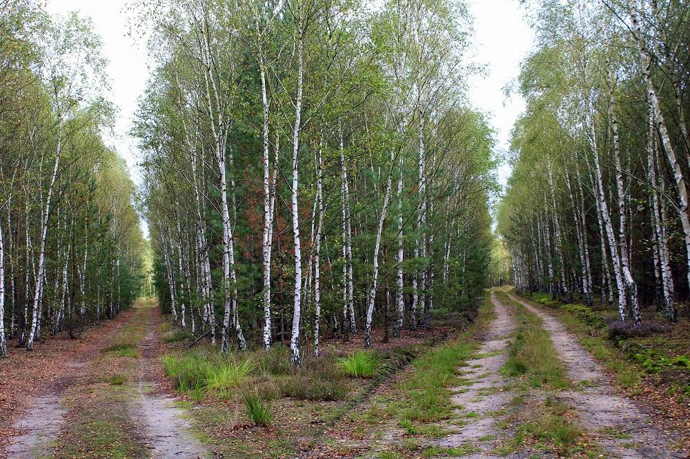 Weggabelung im Wald